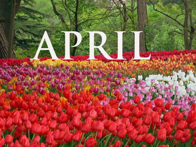 tulip-fl.jpg